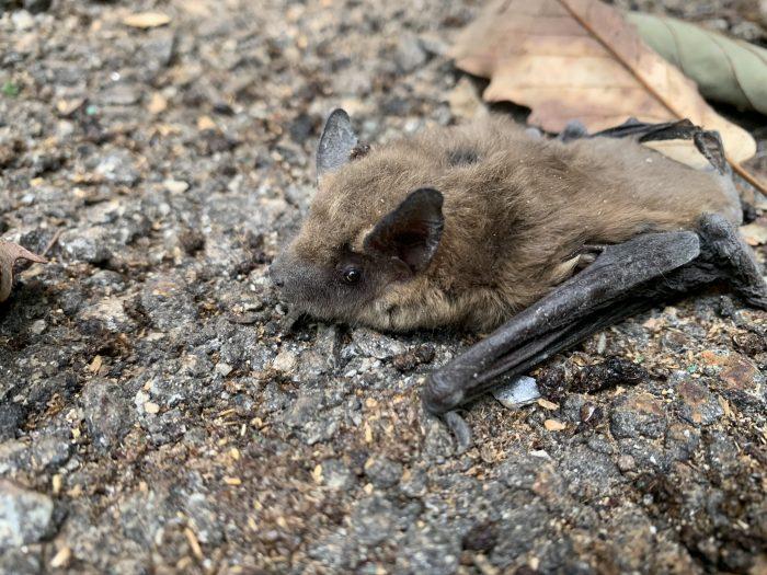 A bat on the ground.