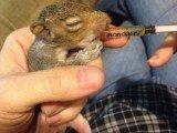 Suwanee Squirrel Trapping job