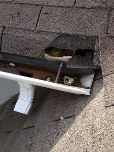 An animal entry point into a homeowners attic.