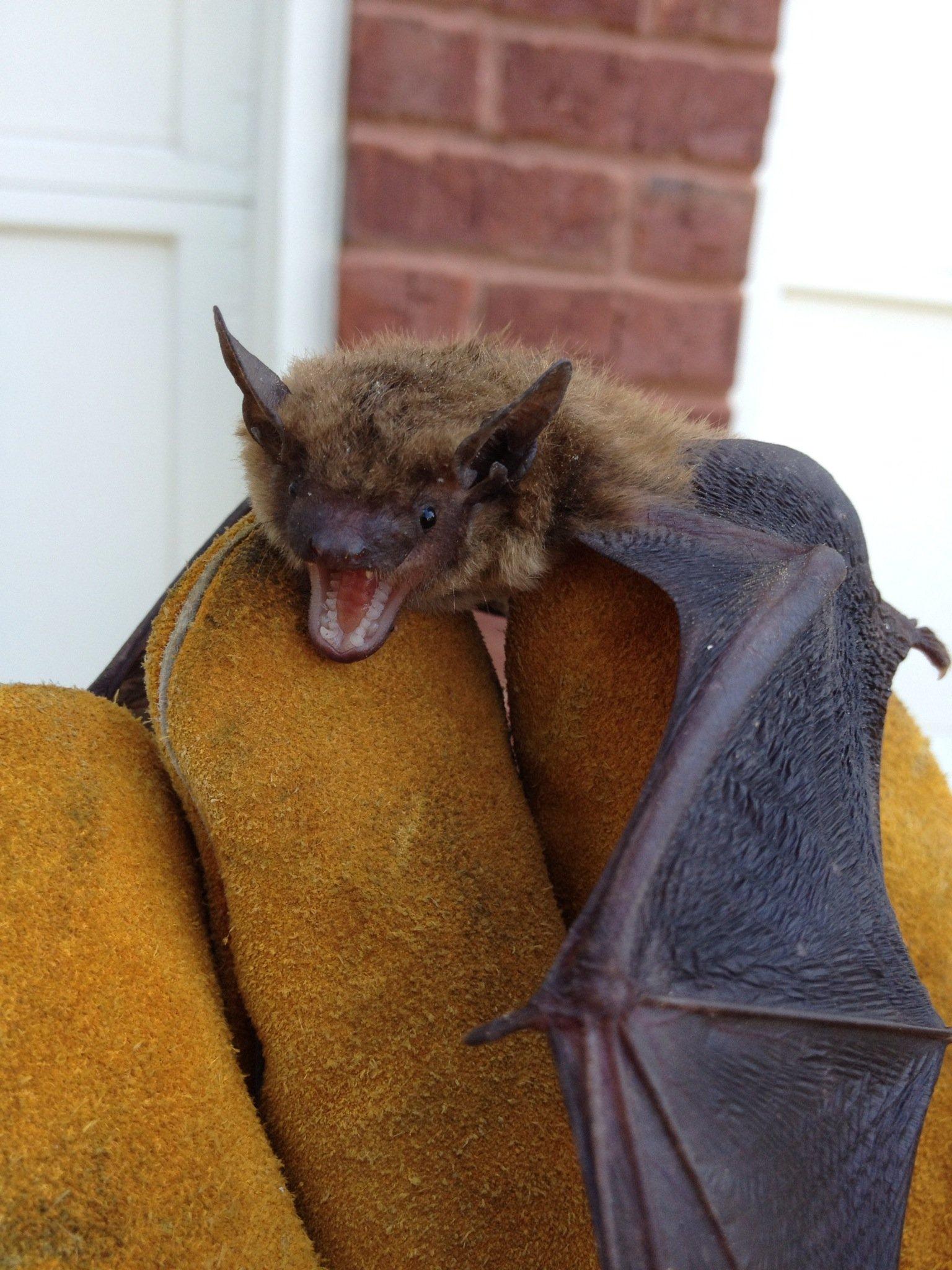 bat hand removed